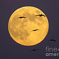 Face On The Moon by Craig Corwin
