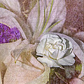 Faded Beauty by Susan McMenamin