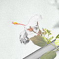 Fading Flower by Melvin Busch