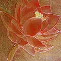 Fading Lotus by Catherine Harms
