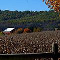 Fairfield Farm by Cathy Shiflett