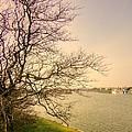Fairhaven Lake by Jacqui Kilcoyne