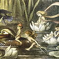 Fairies And Water Lilies Circa 1870 by Richard Doyle