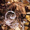 Fairy Ring Door by Douglas Barnett
