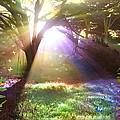 Fairyland Sunset by Alixandra Mullins