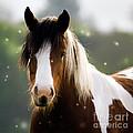 Fairytale Pony by Angel Ciesniarska