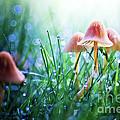 Fairytopia by Sylvia Cook