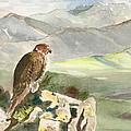 Falcon by Christine Lathrop