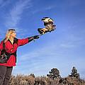 Falcon Friend II by Buddy Mays