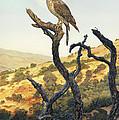 Falcon In The Sunset by Stu Shepherd