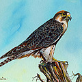 Falcon On Stump by Anthony Mwangi
