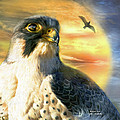 Falcon Sun by Carol Cavalaris