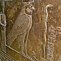 Falcon Symbol For Horus In A Crypt In Temple Of Hathor In Dendera-egypt by Ruth Hager