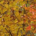 Fall 08-004 by Mario MJ Perron
