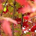 Fall 08-007 by Mario MJ Perron