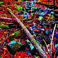 Fall 2014 Ultra 44 by George Ramos