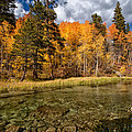 Fall Along Bishop Creek by Cat Connor