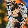 Fall Angel by Jerry Gammon