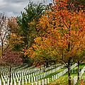 Fall Arlington National Cemetery  by Gary Whitton