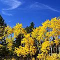 Fall Aspens by Deanna Cagle