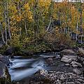 Fall At Bishop Creek by Cat Connor