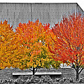 Fall At The Mann by Alice Gipson