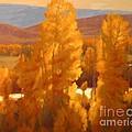 Fall Backlight by Doyle Shaw