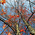 Fall Beauty by Charles Feagans