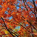 Fall Beauty by Dyana Rzentkowski