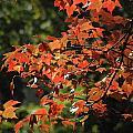 Autumn's Best by Les Scarborough