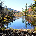 Fall Beaver Dam by Thomas Phillips