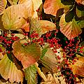 Fall Berries by Larry Jost
