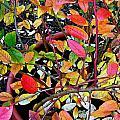 Fall Blueberry Bush by Gary Olsen-Hasek
