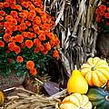 Fall Bounty by Nadine Rippelmeyer