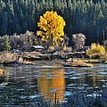 Fall Brilliance On Warm River by Link Jackson