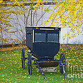 Fall Buggy 2014 by David Arment