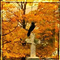 Fall Burst by Gothicrow Images