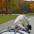 Fall Carriage Ride by Sandi OReilly