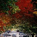 Fall City St. Louis 1 by Monte Landis
