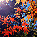 Fall Color 1 by Marie Hicks