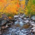 Fall Color Along Bishop Creek, Inyo by Russ Bishop