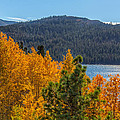 Fall Color At Caples Lake by Marc Crumpler