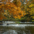 Fall Color At The River by Paul Quinn