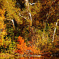 Fall Color Creekside by Holly Blunkall