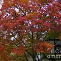 Fall Color by Dale Powell