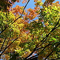 Fall Color by Don Kosterman
