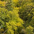 Fall Color Hills Mi 3 by John Brueske