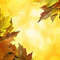 Fall Color Maple Leaves Background Border by Jit Lim