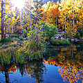 Fall Color Reflection Along Bishop Creek by Scott McGuire