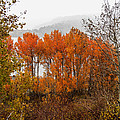 Fall Color Snow Storm by Webb Canepa
